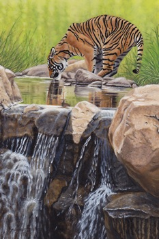 Tiger by the Cascades a.IMG