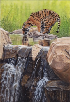 Tiger by the Cascades.IMG