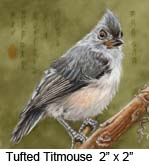 Tufted Titmouse c