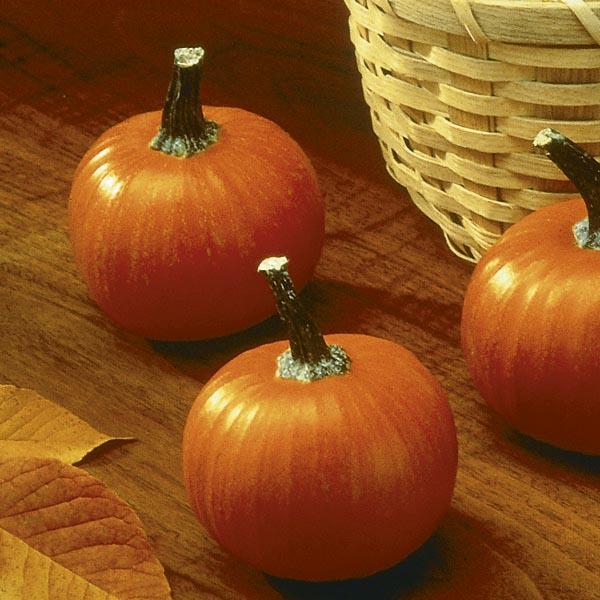 Artists, A-Z Pumpkin Pots ( G-I ) Down in the Garden Journal
