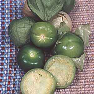 Tomatillo, Mexican Husk Tomato