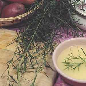 French Tarragon (Artemisia dracunculus var. sativa)