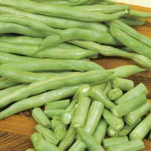 Beans, Bush Beans