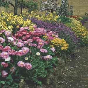 Perennials Assorted