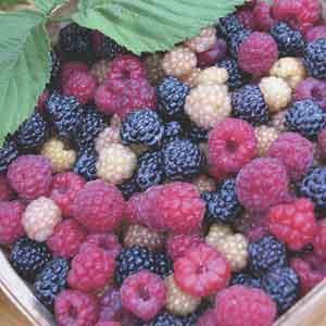 Raspberry Hybrid