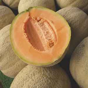 Muskmelon, Cantaloupe (Cucumis melo)