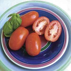 Sauce, Paste Tomato