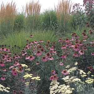 Mixed Perennials