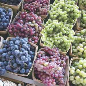 Grape (Vitis)