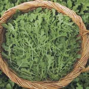 Arugula, Rocket Salad, Roquette