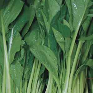 Japanese Mustard Spinach