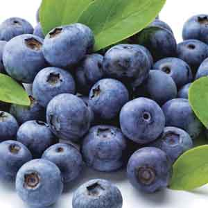 Half Highbush Blueberry
