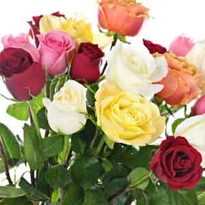 Miniature Rose Indoors