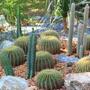 Cactus Outdoors