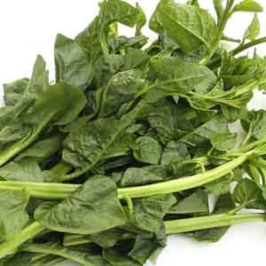 Malabar Spinach, Ceylon Spinach
