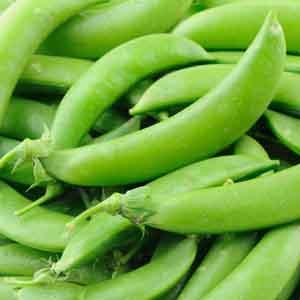 Peas 'Sugar Snap' (Pisum sativum var. sativum)