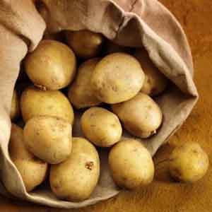 White Seed Potato