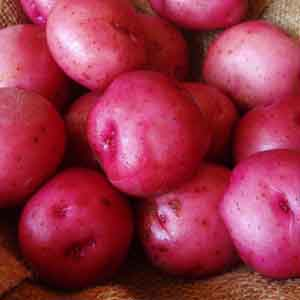 Red Seed Potato