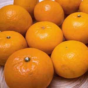 Satsuma, Mandarin Orange