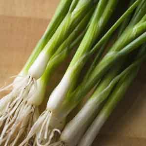 Evergreen Bunching Onion