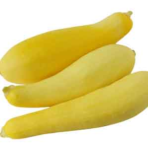 Yellow Crookneck Summer Squash