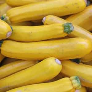Yellow Zucchini, Summer Squash