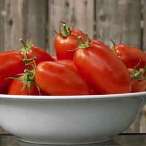 Plum Tomato