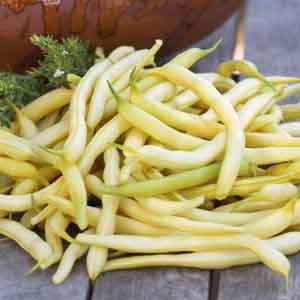 Yellow Wax Bush Beans