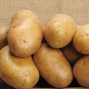 Seed Potato