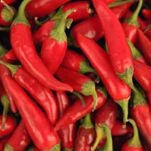 Chili Pepper, Ornamental Pepper