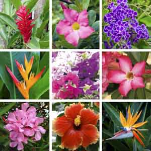 Tropical Blooming Plants