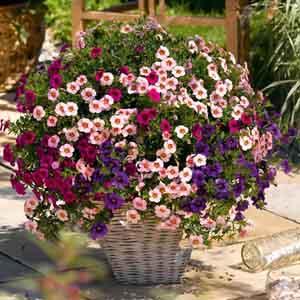 Annual Combination Planter