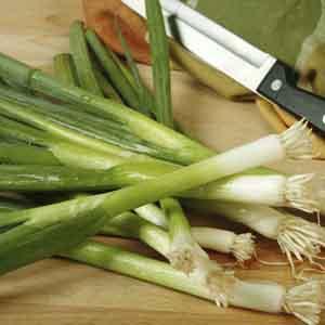Bunching Onion, Scallion