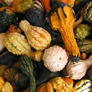 Gourds Small Warted Mix