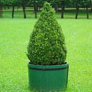 Evergreen Planter