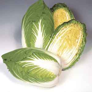 Chinese Cabbage, Napa Cabbage