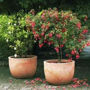 Standard, Pillar Fuchsia