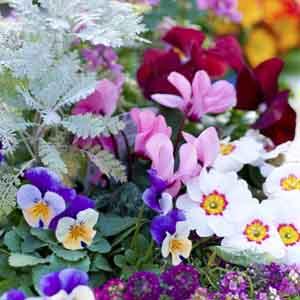 Cool Season Plants