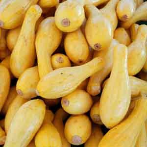 Yellow Zucchini, Summer Squash