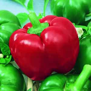 Spicy Bell Pepper