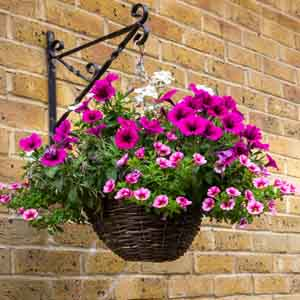 Flowering Basket