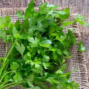 Parsley 'Italian Dark Green' (Petroselinum crispum)