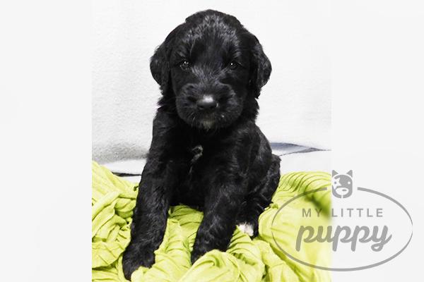 Meet Amie! - My Little Puppy