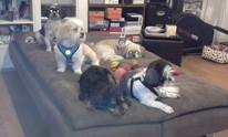 Biscuitz-N-Bonez: Dog Grooming