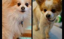 Cutie Paw NY: Dog Grooming