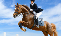 Horse Everything: Horseback Riding Lessons