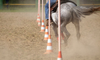 Shadow Hills Equestrian Center: Horseback Riding Lessons