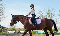 Stage Hill Polo: Horseback Riding Lessons