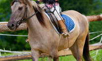 Gerry Rushton Stable: Horseback Riding Lessons