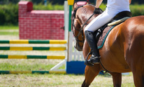 Martin Performance Horses: Horseback Riding Lessons